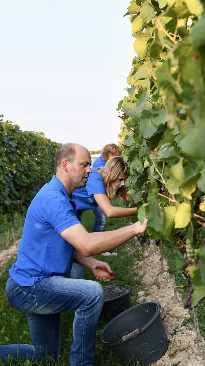 Arbeit im Weinberg beim Weingut Russbach
